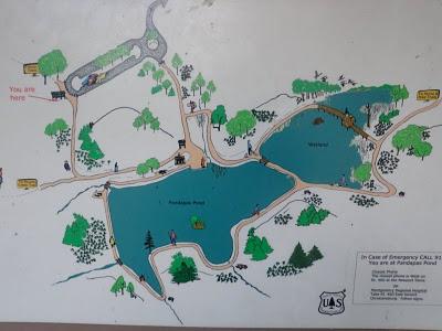 Pandapas Pond Field Guide For A Nature Hike Blacksburg