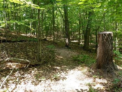 Explore Park Beginner Trail