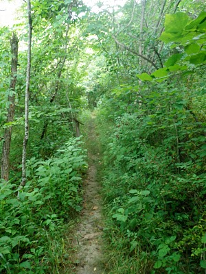 Ellett Valley Trail