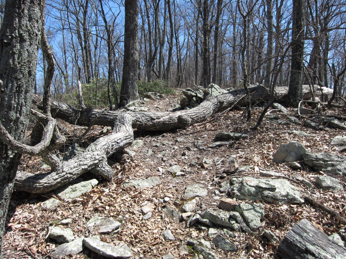 North Mountain Trail – Dragons Back Mountain Bike Loop – Virginia