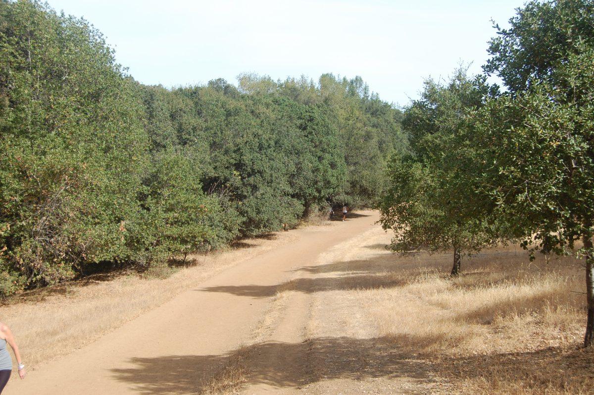 Los Gatos Creek Trail – Los Gatos,CA