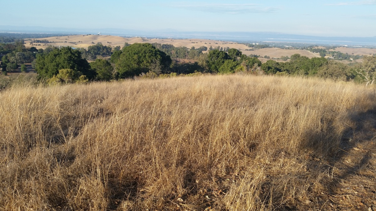 Pearson-Arastradero Preserve Mountain Bike Trails – Palo Alto, CA