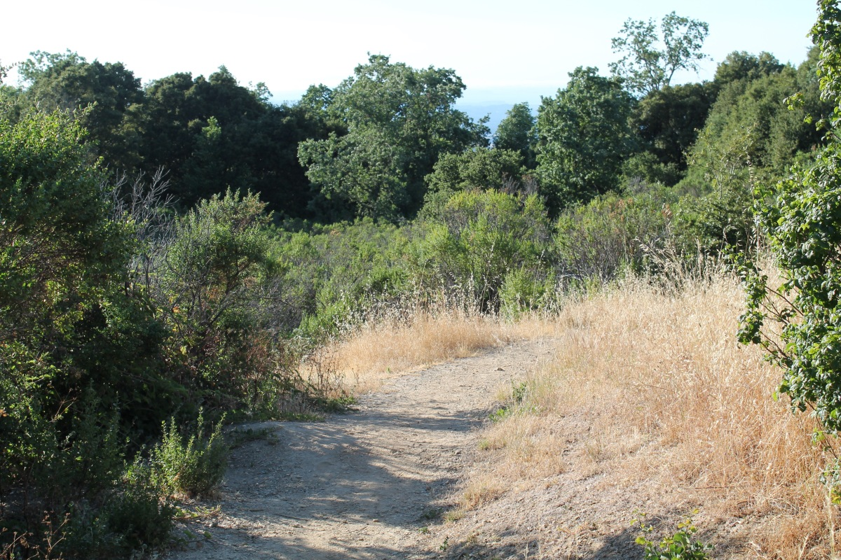 Los Trancos Open Space – Los Altos,CA